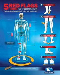 The 5 Red Flags of Pronation – The Physical Therapy Doctor – Bayside, New York Body Muscle Anatomy, Human Body Anatomy, Yoga Anatomy, Human Anatomy And Physiology, Ankle Strengthening Exercises, Posture Exercises, Psoas Stretch, Muscle Imbalance, Exercise Physiology