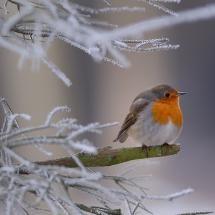 Well hello little birdie:) Pretty Birds, Beautiful Birds, Robin Bird, Little Birdie, Mundo Animal, Exotic Birds, Winter Is Coming, Bird Feathers, Beautiful Creatures