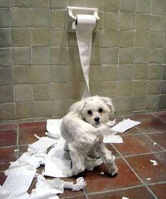 Dog Obsessed With Eating Paper