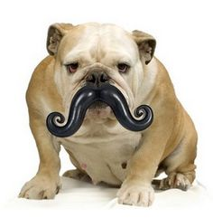 a. dog. with. a. mustache.