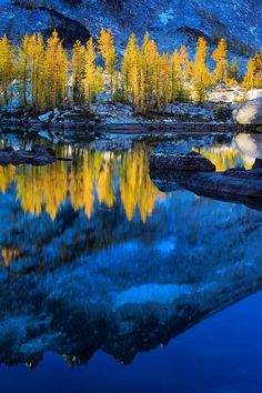 """""""Blue And Yellow"""" - photo by Inge Johnsson; Tamaracks reflecting in Lake Leprechaun in Washington's Enchantment Lakes wilderness area in the Cascade Mountains. Yellow Art, Mellow Yellow, Blue Yellow, Orange Brown, Golden Yellow, Orange And Purple, Green And Gold, Black Gold, Beautiful World"""