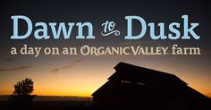 Our farmers work hard to produce the best organic food for you and your family. Take a journey from dawn to dusk to experience what a day is like on an Organic Valley farm!