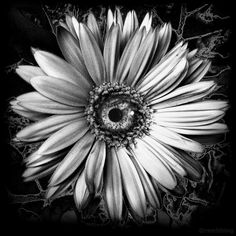 Crazy Daisy Never Say Die - everyday surreal photomontage by Richard Smith - RSMITHINGS.com