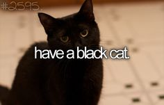 Always have one. Guess that's the witch in me!!! Started when I first had Allie. She had a black kitten in her first litter.