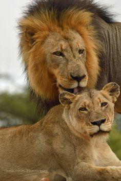 aslan & aslan
