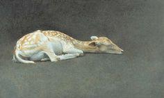 Marzio Tamer, sleeping fawn, tempera on board