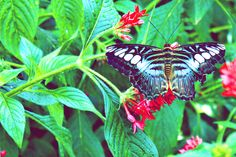 Butterfly. Visit on FB at Kathleen R K. Photography