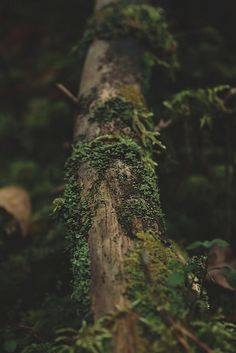 natureac:  This blog will make you feel at peace