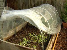 Growing Food Through the Cold Season : Home Improvement : DIY Network
