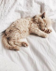 ♕ pinterest - tahliemay ♕ Tap the link Now -  Luxury Cat Gear - Treat Yourself and Your CAT!  Stand Out in a Crowded Wo