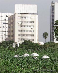 #nature #naturelovers #arvore #sol #green #tree #savetheplanet #salveoplaneta #preserve #respect #sustainability #sustentabilidade #future #love #amor #terra #planet #mãe #natureza #flowers #flores #me #cogumelos #predios by andersoncookies http://ift.tt/1qSgAmt