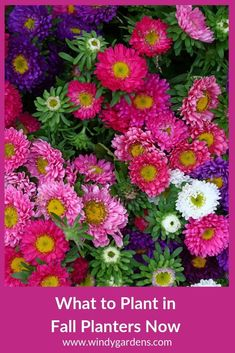 Fall is the time to refresh your summer flower containers with autumn colors and plants. Weve listed some of the popular items that are used in the fall planters so you can get some ideas. Youll be glad you got it done. Fall Containers, Succulents In Containers, Container Flowers, Container Plants, Fall Flowers, Summer Flowers, Flowers Perennials, Planting Flowers, Fall Planters