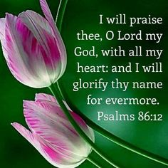 Biblical Quotes, Bible Verses Quotes, Scripture Verses, Psalm 86, Prayer Scriptures, Praise And Worship, Worship God, Faith In God, Strong Faith