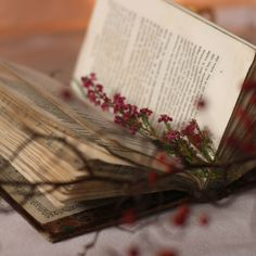 """♥""""Perhaps there is some secret sort of homing instinct in books that brings them to their perfect readers. How delightful if that were true.""""  ― Mary Ann Shaffer, The Guernsey Literary and Potato Peel Pie Society"""
