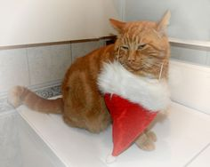 Je ne veux pas être le Père Noël - Photo gratuite et libre de droit