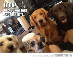 What it's like to eat with dogs in the house. True!
