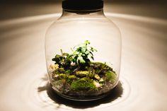 Lamparium  Lamp + Terrarium  Greencarboy.com Terrarium Plants, Green, Home Decor, Decoration Home, Room Decor, Home Interior Design, Home Decoration, Interior Design