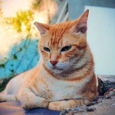 @a_cat_a_day #catstocker #cat #cats #kitten #kittens... Follow us on Instagram :D #cats #cat #catlover #lovecats #funny #fun #cute #socute #feline #felines #felinefriend #fur #furry #paw #paws #kitten #kitty #kittens #kittycat #kittylove #fluffy #fluff