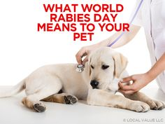 What World Rabies Day Means To Your Pet http://localvalue.vet/wp-content/uploads/2016/08/what-world-rabies-day-means-to-your-pet.png When rabies pops in your head you are probably thinking of a ferocious dog foaming at the mouth. While the drool, the frothing mouth, and the angry disposition are an accurate representation of a typical case of rabies, there is more to rabies that you should definitely know. Rabies is something... http://localvalue.vet/social-media/world-rab