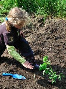 10 légumes faire pousser à l'ombre