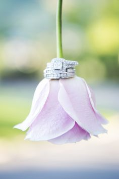Wedding rings on a rose (Two One Photography)