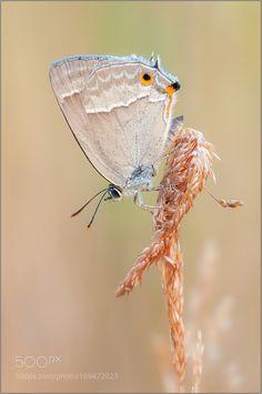good night my beautiful butterfly by amrowetz #nature #photooftheday #amazing #picoftheday