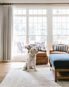 Golden Doodle in our Maryland Avenue Project - our furniture is kid and pet friendly!