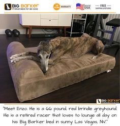"""Customer photo. To get this bed, https://bigbarker.com/  """"Meet Enzo. He is a 66 pound, red brindle greyhound. He is a retired racer that loves to lounge all day on his Big Barker bed in sunny Las Vegas, NV.""""  American made dog beds, dog bed large breed, dog bed living room, dog bed luxury"""