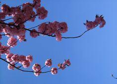 Cherry trees in Globe Road London Diary, Cherry Tree, Globe, In This Moment, Third, Trees, Book, Speech Balloon, Books