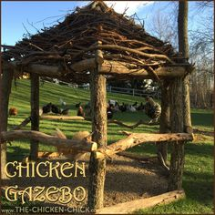 Chicken Gazebo for Hawk protection.  A free-range flock is at higher risk of predation than confined birds. Providing natural and artificial cover in the form of bushes, boxes, branches will provide a degree of security and safe-haven when predators are detected.