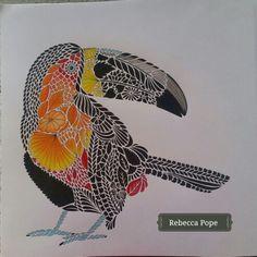From Millie Marottas Animal Kingdom Colouring Book Marotta Tropical Wonderland