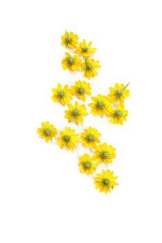 roadside daisies (mary jo hoffman)
