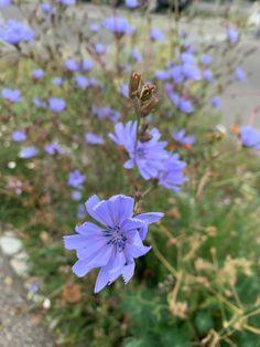 Заставка на айфон, цветы