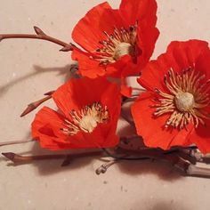 Flora Nordica (@_flora__nordica_) • Фотографије и видео записи на услузи Instagram Flora, Red Poppies, Elegant, Plants, Instagram, Classy, Plant, Chic, Planets