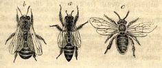 """""""Bees, it is said, are the most studied creatures on the planet after man."""""""