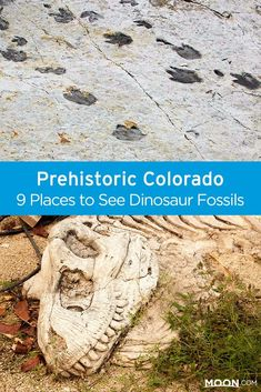 Colorado's rich prehistory means it has a number of sites to see traces of the giants who once walked the earth: Dinosaur Ridge, Triceratops Trail and more. Make the dinosaur lovers in your family happy with a visit to these 9 sites in Colorado where you Road Trip To Colorado, Visit Colorado, Colorado Hiking, Colorado Mountains, Trail Ridge Road Colorado, Dinosaur Tracks, Dinosaur Park, Dinosaur Fossils, Oh The Places You'll Go