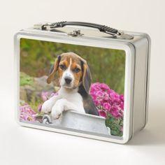 Cute Tricolor Beagle Dog Puppy Pet in a Milk Churn Metal Lunch Box - decor gifts diy home & living cyo giftidea