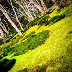 苔が風情ある祇王寺、京都 京都方面に出掛けると大概雨が降る…  Garden at Gioji, Kyoto, Japan It's famous for the history and its various kinds of moss in the garden.  #祇王寺 #庭園 #苔寺 #苔 #京都 #日本 #嵯峨 #寺 #平家 #歴史 #写真 #緑 #冬 #風情 #Gioji #temple #Kyoto #Japan #picture #photo #photograph #garden #Saga #green #moss #winter #history #photooftheday #art #WelcometoJapan
