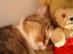 Kiko and pet *IA