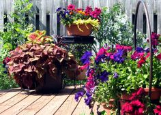 Container garden by BluesyBelle: I love the wine colored petunias! This will be my back patio, this fall!