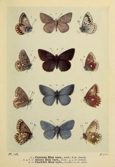 The butterflies of the British Isles /.  London :F. Warne,1906
