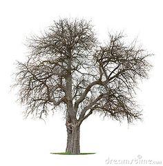 Beauty, Love, Generosity = Apple Tree = My Bender Boy.....