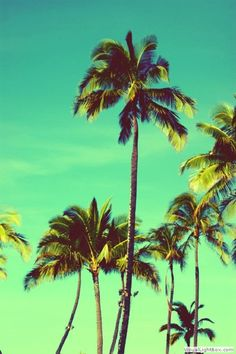take me to where the palm trees sway in the sea breeze