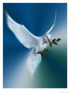 ❤️ Come Holy Spirit ❤️ ♡ birds of peace ♡ . X ღɱɧღ Dove Pictures, Jesus Pictures, Dove Images, Pictures Of Peace, Peace Art, Peace Dove, Peace Poster, Radical Acceptance, Prophetic Art