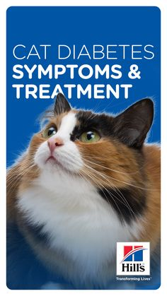 Learn from a Veterinarian: Discover the underlying causes, typical symptoms and possible treatments for both type 1 and type 2 of diabetes in cats. What Causes Diabetes, Cats That Dont Shed, Cat Playhouse, Buy A Kitten, Cat Nutrition, Cat Vs Dog, Cat Stands
