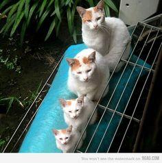 Russian Nesting Cats