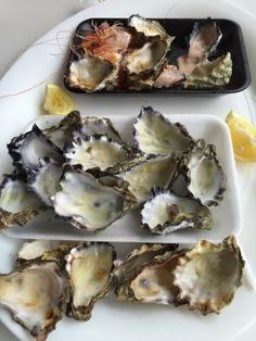 Photo of Jim Wilds Oyster Service South Wales, Oysters, Berry, Ethnic Recipes, Tips, Pictures, Blueberry