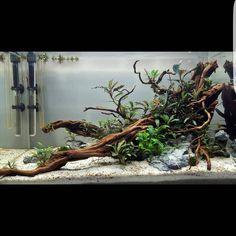 #acquario #acquari #acquariologia #acquariofilia #aquarium #aquariums #piante #natura #pesci #zen #design #arredamento #layout #layouts #layoutdesign #roccia #rocce #legno #legni #adaitaly