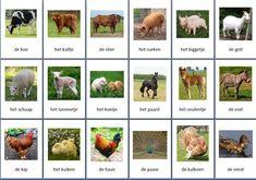 Grote themakaarten voor het thema boerderijdieren, we hebben voor vele thema's grote en kleine themakaarten op de website van Juf Milou.