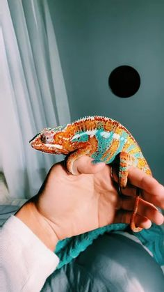 Video not supported for your browser Cute Reptiles, Reptiles And Amphibians, Cute Creatures, Beautiful Creatures, Kids Camping Bed, Cute Baby Animals, Animals And Pets, Chameleon Terrarium, Chameleon Pet